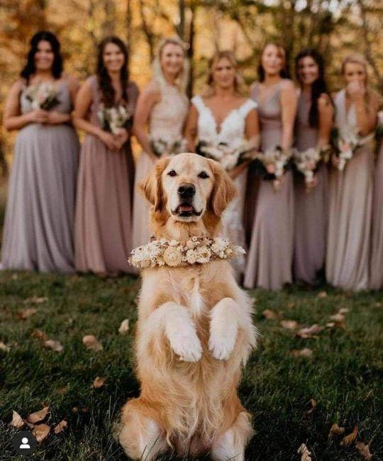 Tus Mascotas en tu boda 🐕🐩🐱 2