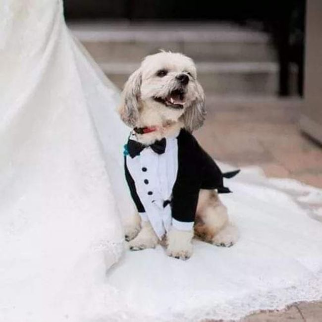 Tus Mascotas en tu boda 🐕🐩🐱 3