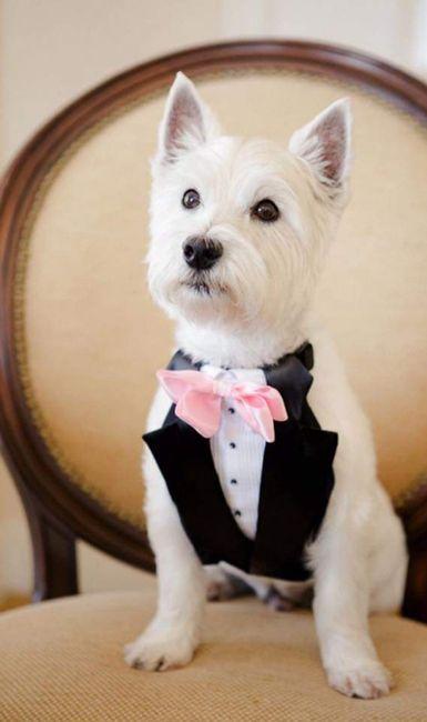 Tus Mascotas en tu boda 🐕🐩🐱 4
