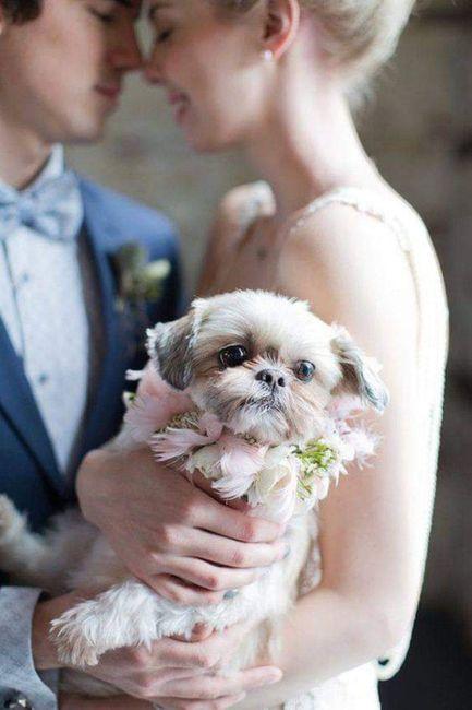 Tus Mascotas en tu boda 🐕🐩🐱 5