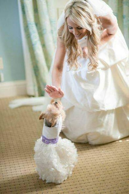 Tus Mascotas en tu boda 🐕🐩🐱 7
