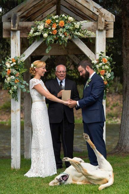 Tus Mascotas en tu boda 🐕🐩🐱 8