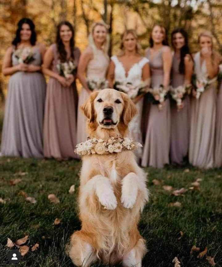 Tus Mascotas en tu boda 🐕🐩🐱 - 2