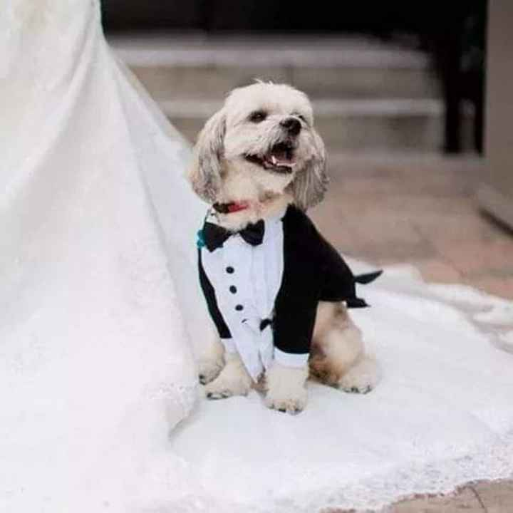 Tus Mascotas en tu boda 🐕🐩🐱 - 3