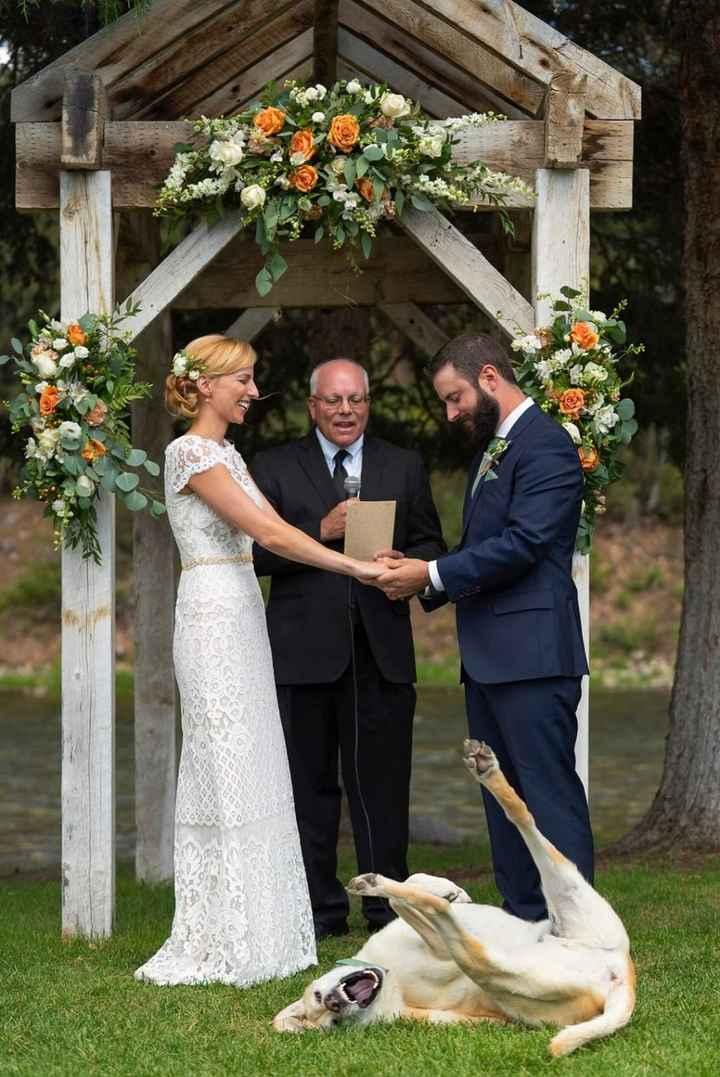 Tus Mascotas en tu boda 🐕🐩🐱 - 8