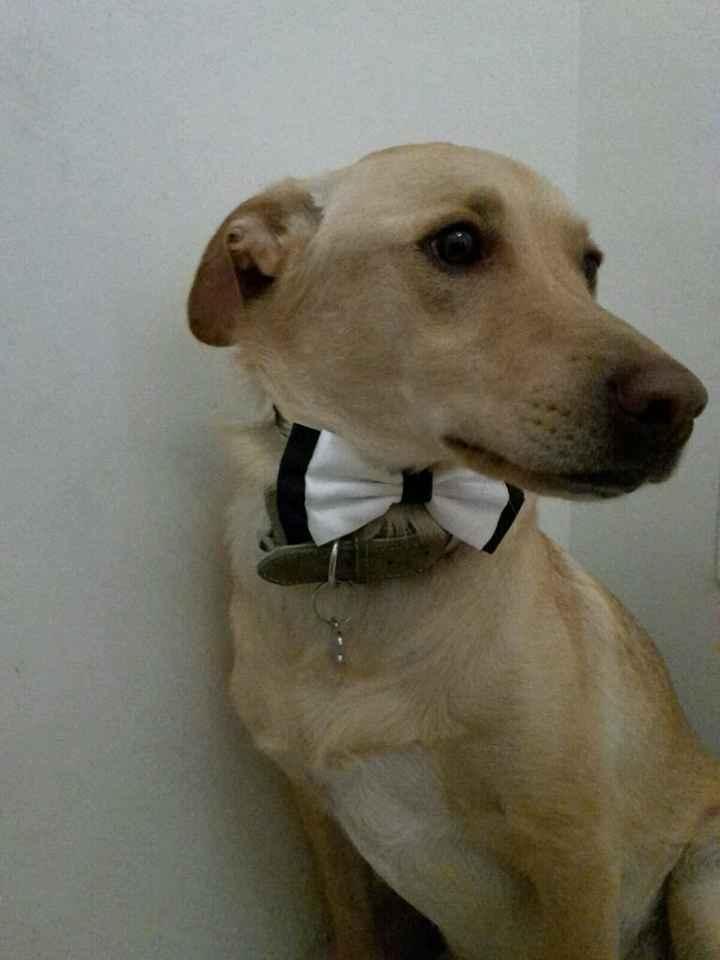 Mascotas en la boda - 2