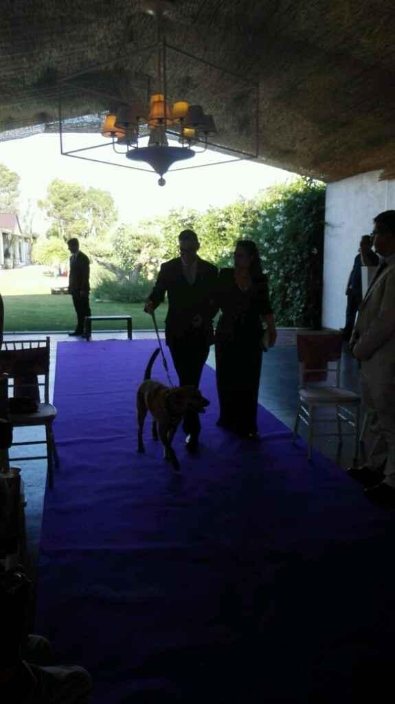 Mis perros vienen a la boda - 2