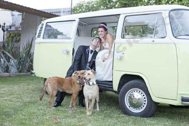 ¡No me canso de ver fotos de perros en bodas! - 1
