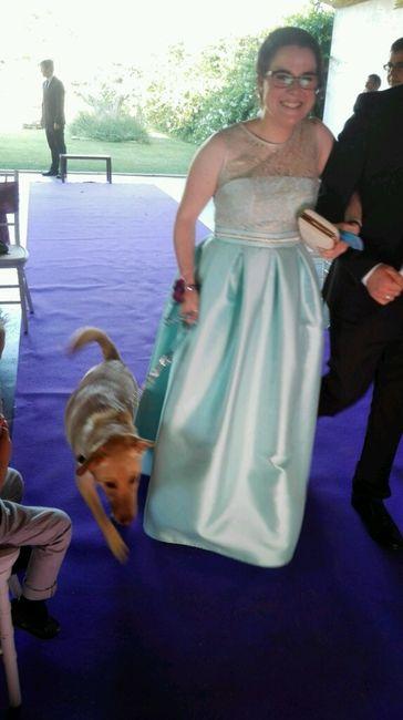 Mis perros vienen a la boda - 1