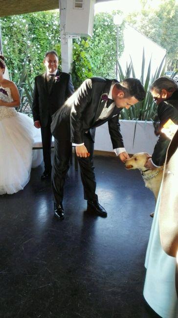 Mis perros vienen a la boda - 4