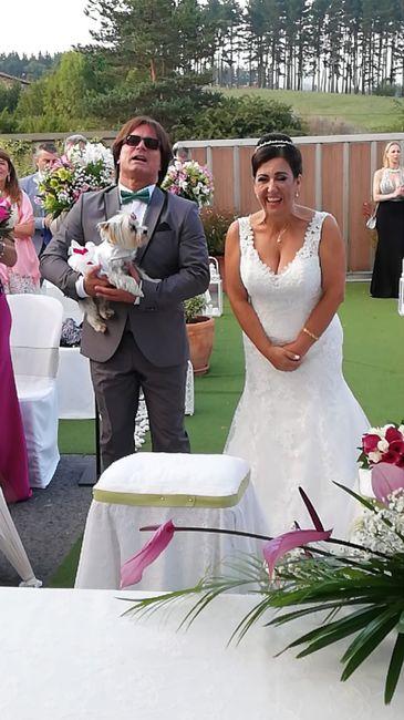 ¿Mascotas en la boda? 1