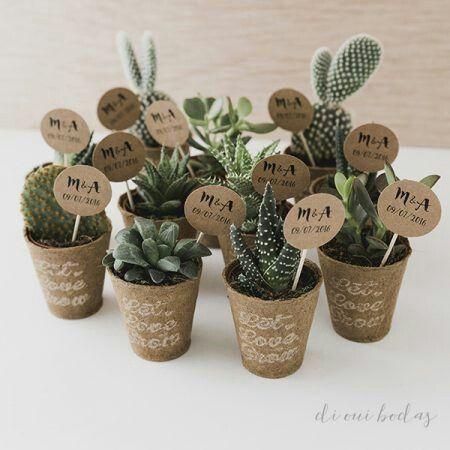 cactus para regalo organizar una boda foro