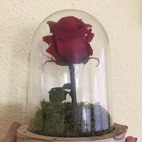 Rosa eterna - 1