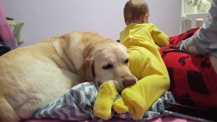Bebés y perros en casa 1