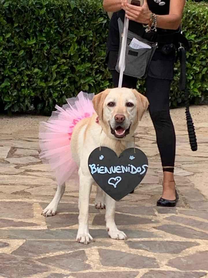Alguna empresa que se encargue de llevar a tu perro a la.ceremonia? - 1
