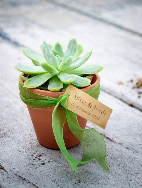 Plantas crasas organizar una boda foro - Plantas pequenas para regalar boda ...