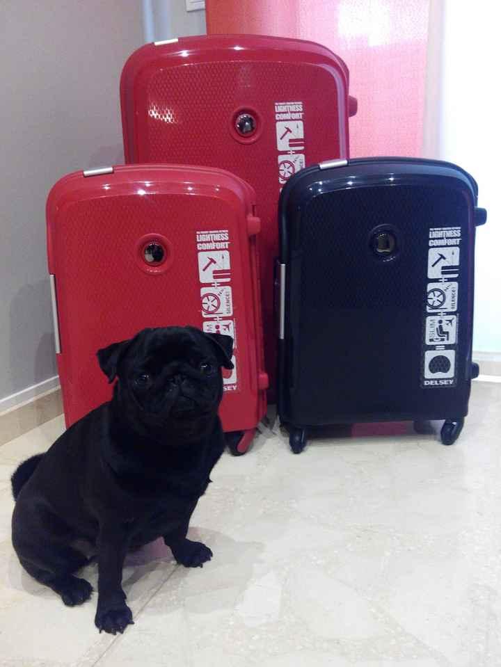 Ya tenemos las maletas para la luna de miel!! - 1