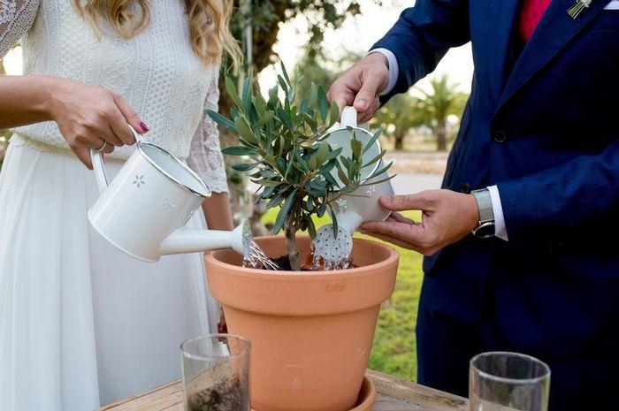 ¿Conocéis la ceremonia de plantación? 🌱 1