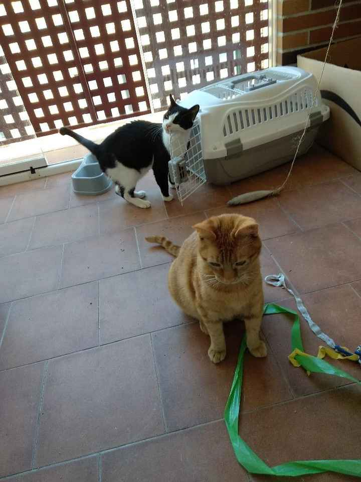 Gatos elegantes - 1