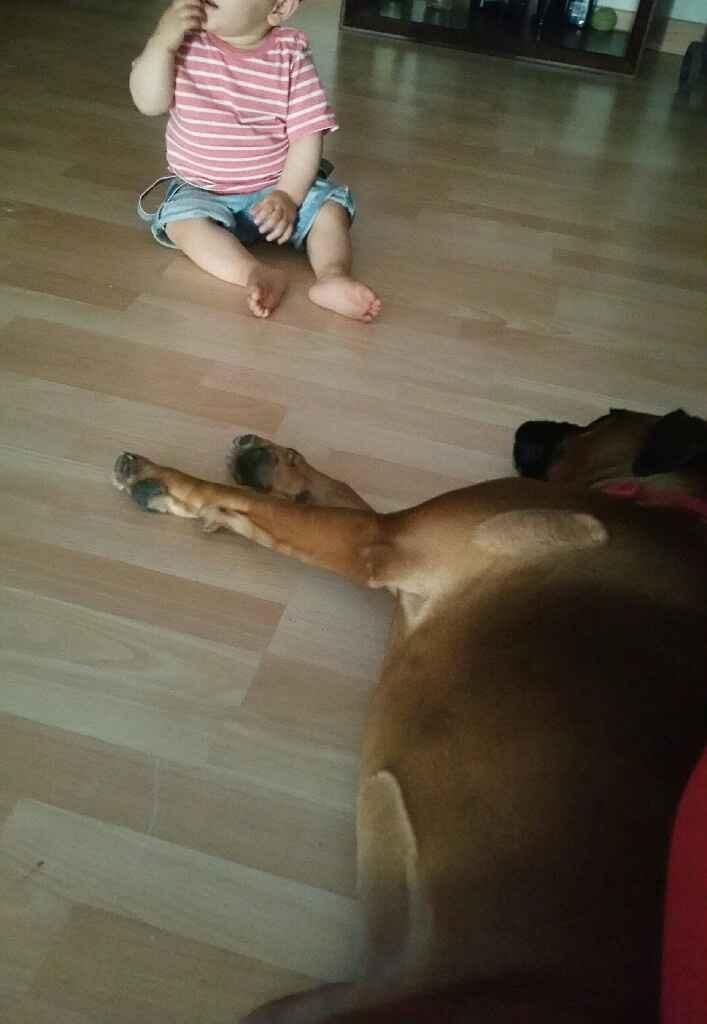 Bebés y mascotas - 1
