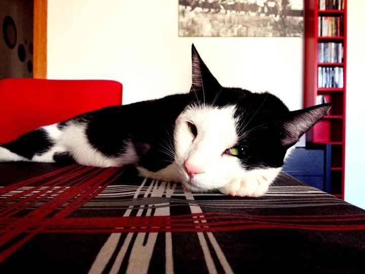 Mi gatito Rai