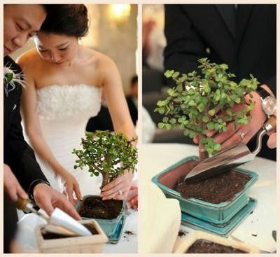 Ceremonia del árbol