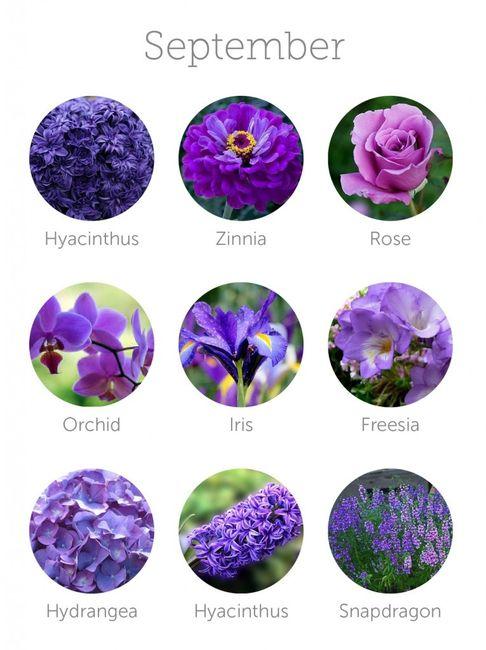 Flores Septiembre Fotos