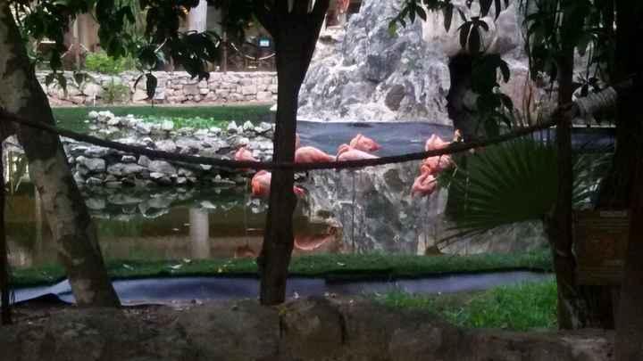 Mi experiencia en hoteles palladium riviera maya - 1