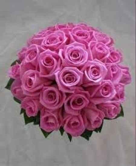 rosas aqua