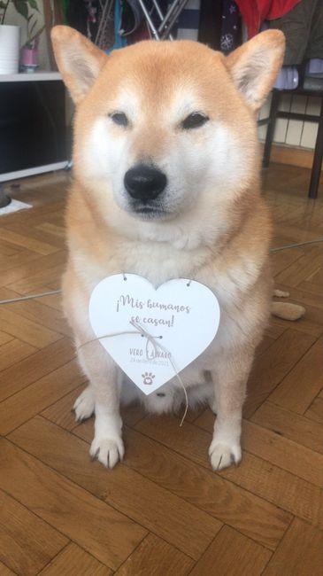 Perros en la boda 🐶🐕💕 1