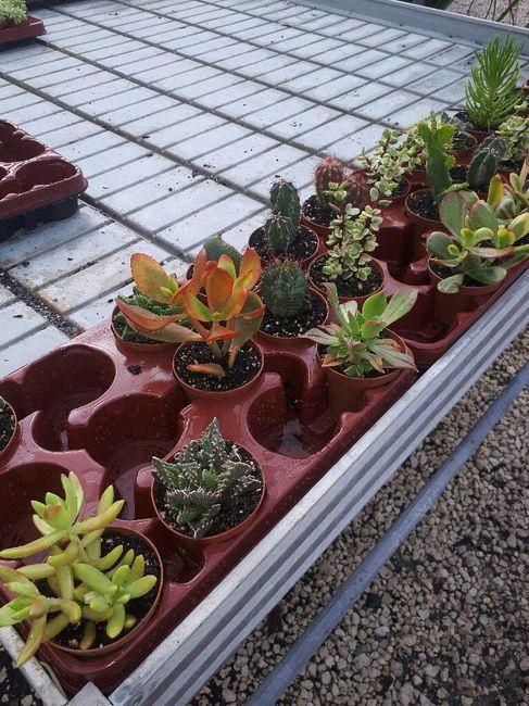 Cactus para regalar 2