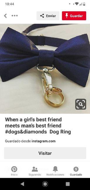 El perro llevando las alianzas 1
