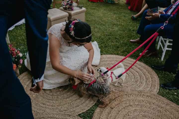 Mi perro llevará los anillos 🐶 - 4