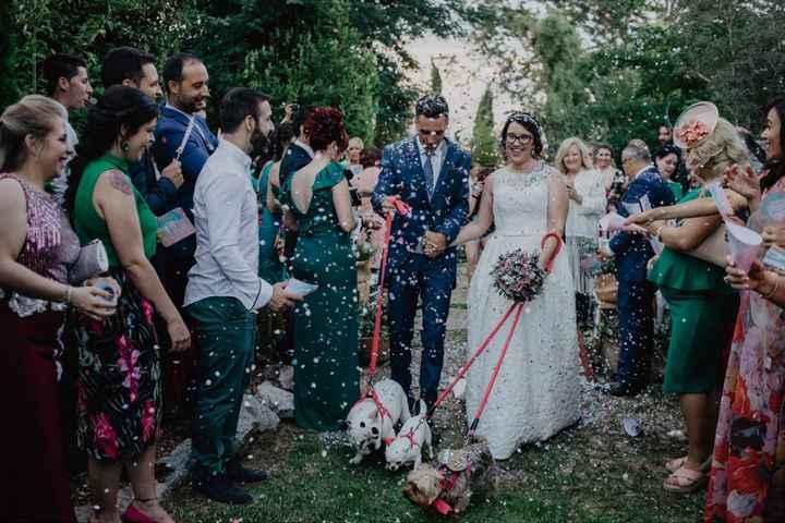 Mascotas en la boda - 1