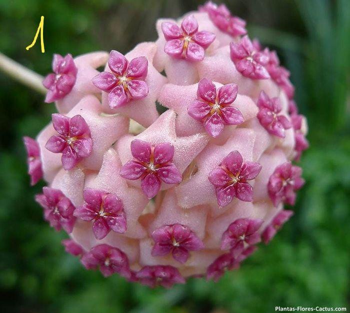 3 Flores Raras Las Pondrias En Tu Ramo Pagina 2 Foro Bodas Net