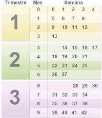 14 semanas de embarazo cuantos meses?? - Futuras Mamás - Foro Bodas.net