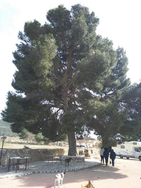 Decorar arbol/tronco para ceremonia 1