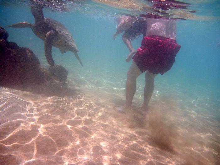 Tortuga en Maui