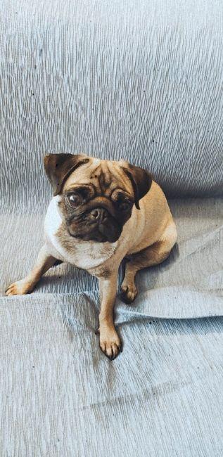 ¿Tenéis una mascota en común? 🐶🐱🐦 28