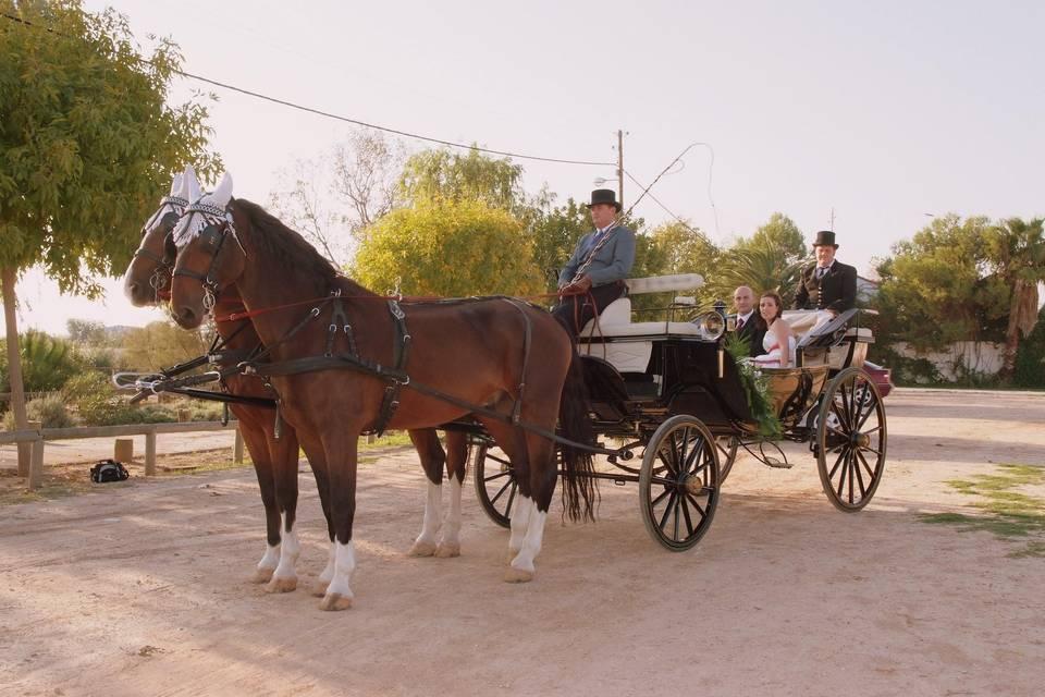 Carruajes para bodas