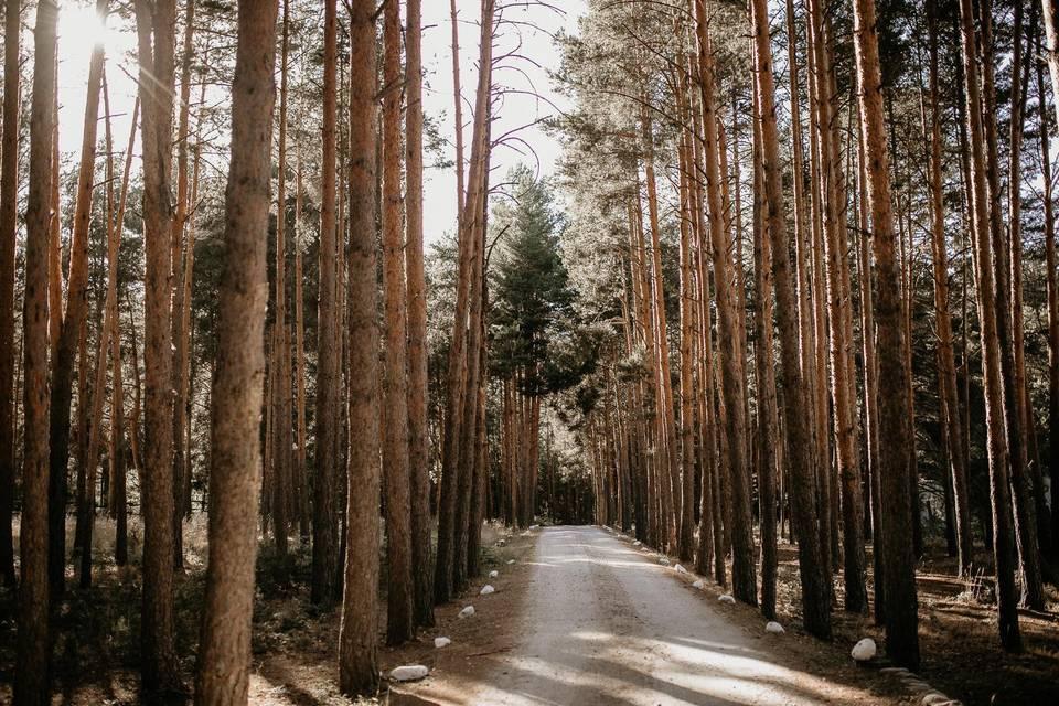 Bodas en un bosque