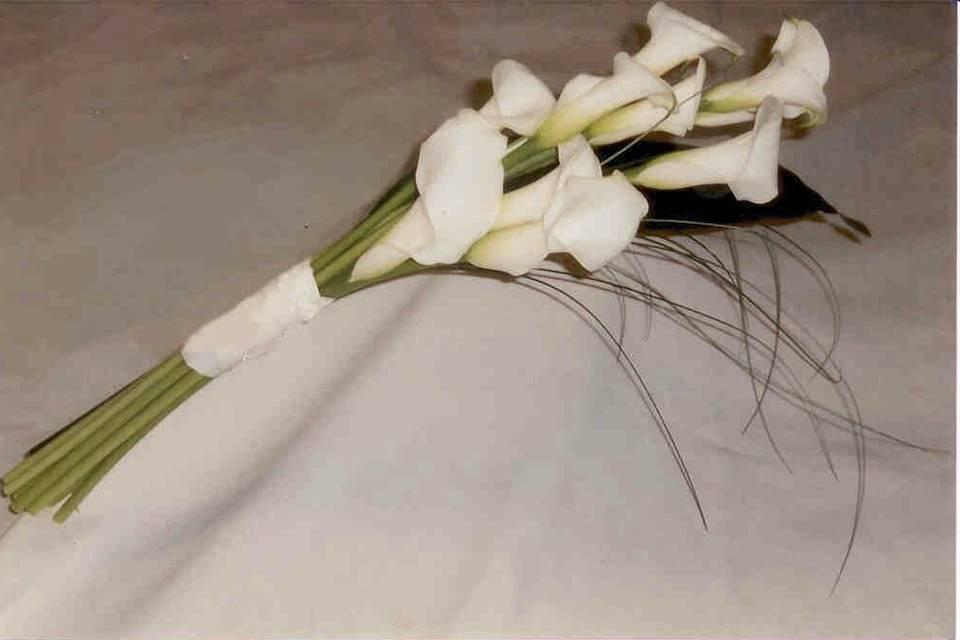 Flors i Plantes Bertrán