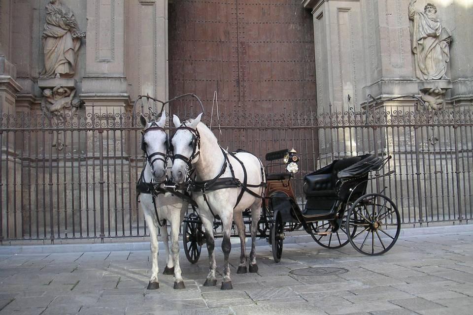 Dos bellos caballos de pura raza española