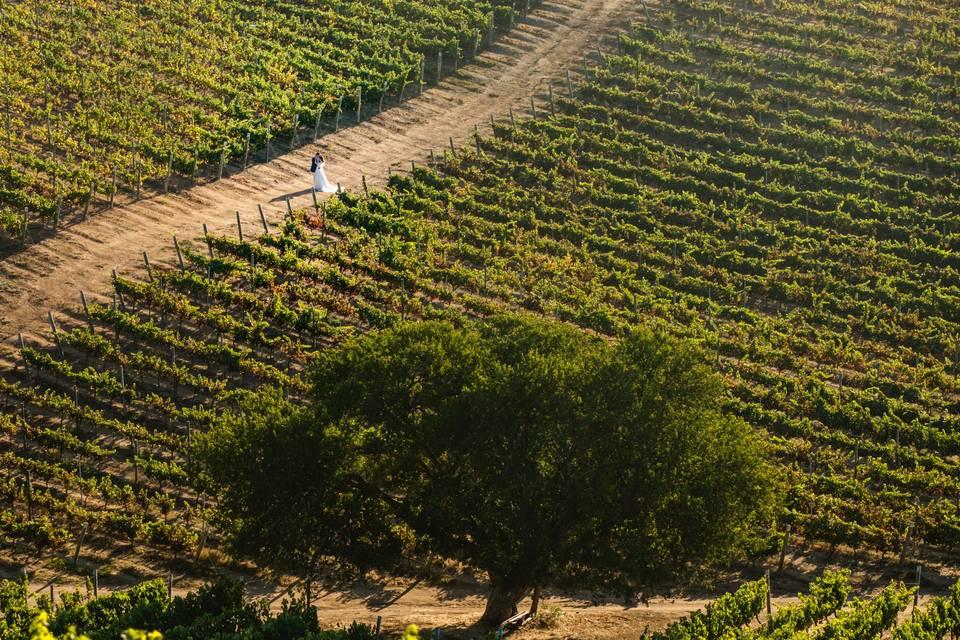 Novios entre viñas