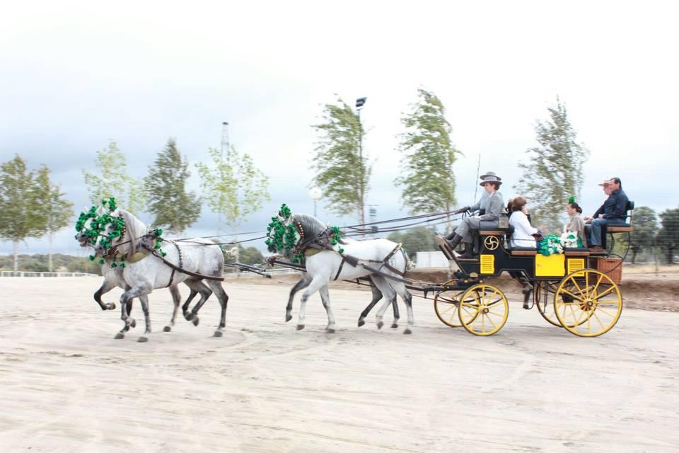 Misan - Coche de caballos